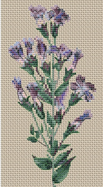 click here to view larger image of Gentiana Crinita (Blue Gentian) (counted cross stitch kit)
